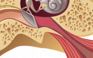 Евстахиева труба: что это и каковы ее функции