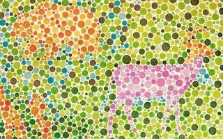 Тест на дальтонизм с цифрами — картинки с комментариями