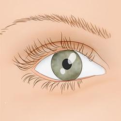 Дергается нижнее веко правого глаза - что делать, как избавиться?