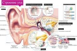 Как восстановить слух после отита: советы врачей