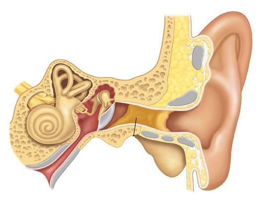 Болезни уха: симптомы и лечение ушных заболеваний