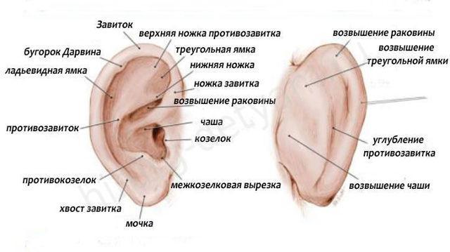 Наружный и внутренний слуховой проход: анатомия