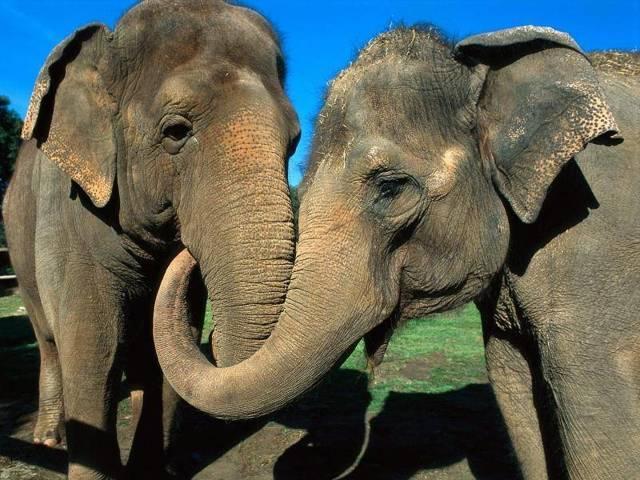 Слух человека и животных: сравнительная характеристика