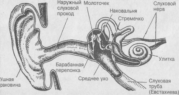 При каких болезнях дергает ухо?